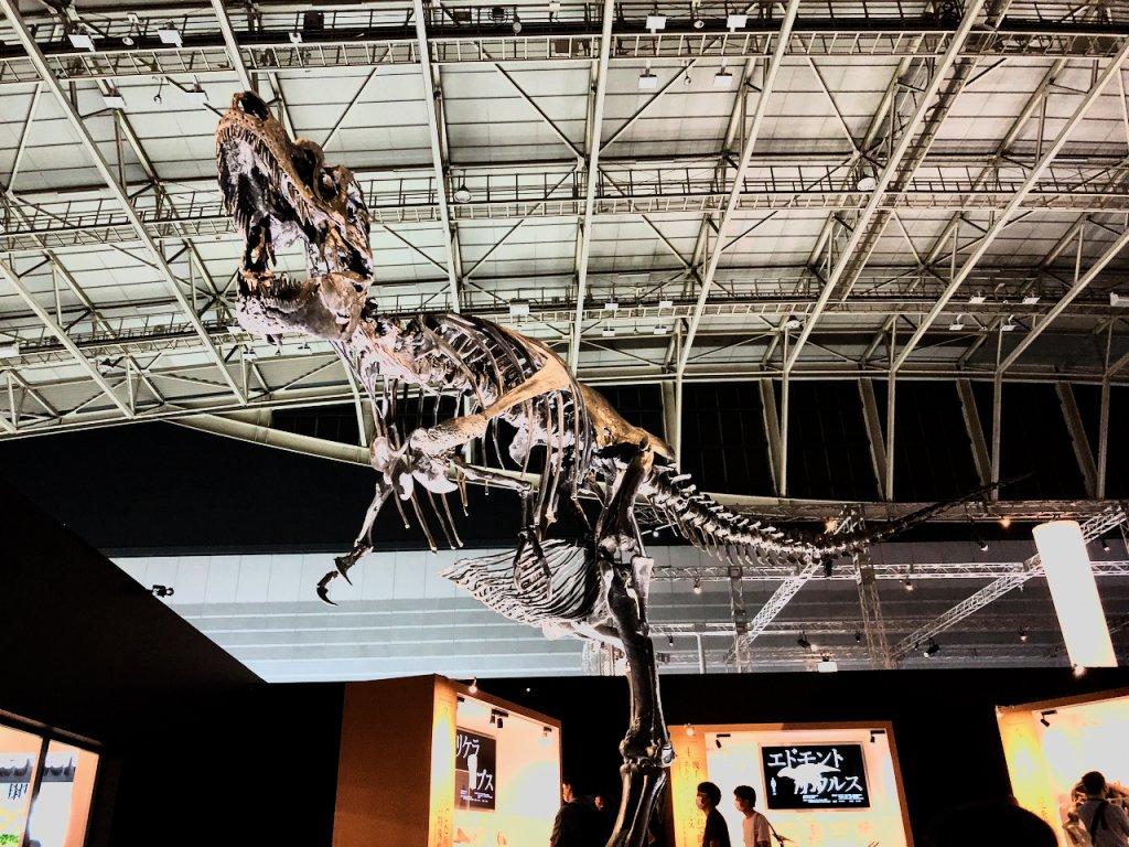 ゴルゴサウルス「ルース」